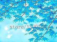 20ブルーメープルツリー種子レアカナダミニ盆栽パープルメープル盆栽植物のための植木鉢プランター