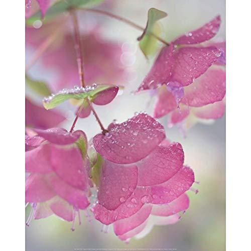 Nieuwe imagesapijten 40 x 50 cm oregano en ochtendau/oregano plant met drewdrops/oregano met touw