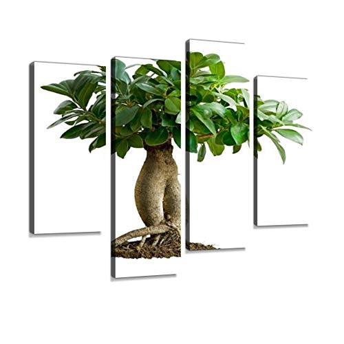 HIPOLOTUS 4 Panel Canvas Pictures Bonsai, ficus microcarpa Ginseng ginsengs and Pictures Wall Art Prints Paintings Stretched & Framed Poster Home Living Room Decoration Ready to Hang