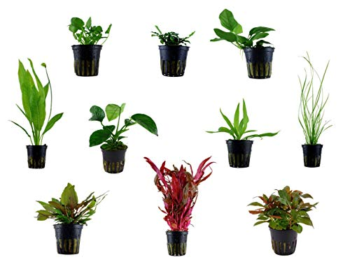 Tropica Einsteiger Maxi Set mit 10 Topf Pflanzen Aquariumpflanzenset Nr.37 Wasserpflanzen Aquarium Aquariumpflanzen