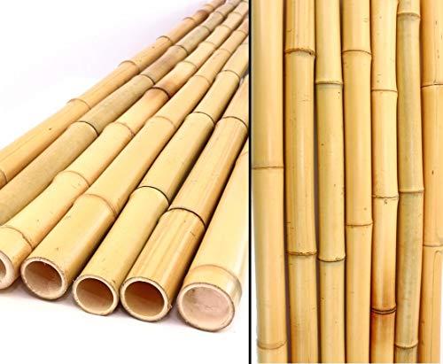 bambus-discount.com 20er Set Bambusrohr gelb, Moso Bambus, Gebleicht, Durch. 2,8-3,5cm, Länge 300cm (BAYS3003)