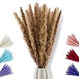 pamindo Hierba de Pampas de secado pequeño y muy largo como decoración en jarrón – 75 cm de longitud y fácil de acortar – Flores secas naturales suaves y esponjosas en color marrón natural