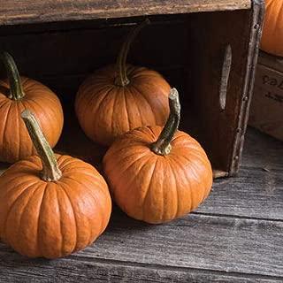 wee bee pumpkin