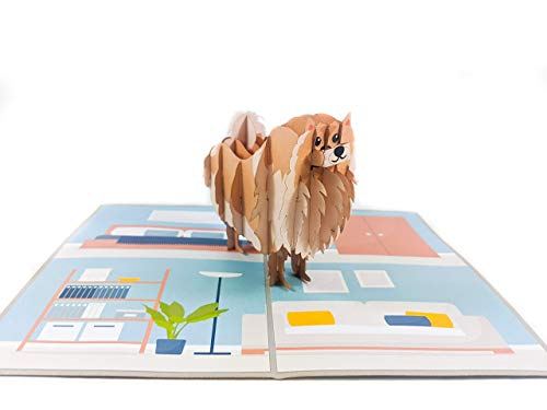 Chao Cards Pomeranian 3D Pop Up Greeting Card - Handmade Gift for Dog Lover, Pet, Friend, Wife, Husband on Any Occasion, Birthday, Thank You, Get Well, Mother's Day, Father's Day, Valentine Day