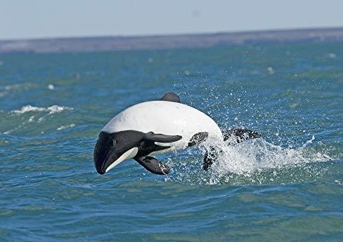 3D-Lentikular-Postkarte/Hologramm-Karte Delfine/Delphine: JAKOBITER-DELFIN IM SPRUNG (10039)