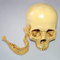 クレーン人間、モデル1:1クレーン人間の解剖学教育における樹脂デコレーションイエロー19 * 16.5 * 11.5センチメートル