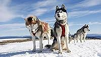 木製ジグソーパズル大人のための300個子供ハスキーカップル犬雪アラスカ面白い家族ストレス救済ゲーム家の装飾40Cmx28Cm