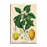 dsdsgog Gemälde auf Leinwand Vintage Zitrusfrucht Zitronen