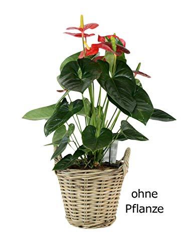 casamia Pflanz-Korb Blumentopf groß ø 30 x H 25 cm mit Kunststoffinlett aus Rattan kubu Grey