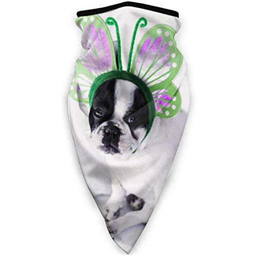 wit en zwart korte jas kleine hond het dragen van een groene vlinder hoofd band winddicht gezicht masker verstelbare gezicht hoofd warmer voor outdoor sport multifunctionele hoofddeksels