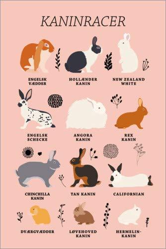 Poster 61 x 91 cm: Kaninchenrassen (dänisch) von Kidz Collection/Editors Choice - hochwertiger Kunstdruck, neues Kunstposter