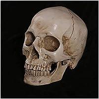 樹脂頭蓋骨彫刻スケッチモデル-科学解剖学頭蓋骨頭筋骨医療芸術描画モデル-人間の頭蓋骨アート-アーティストのための参照用