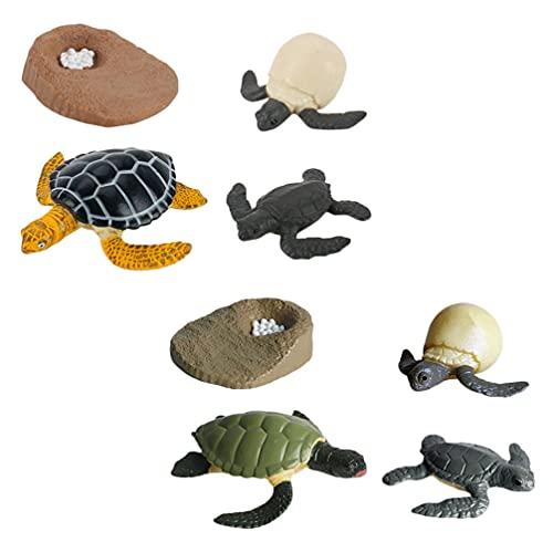 Angoily 2 Conjuntos de Tortuga Marina Océano Animal Marino Crecimiento Ciclo de Vida Figura Modelo Proyecto Escolar Pastel Suministros de Fiesta para Niños Pequeños