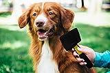 Pets First Kamm und Bürste für Katzen, Hunde und kleine Säugetiere, Pudelbürste, Large, schwarz