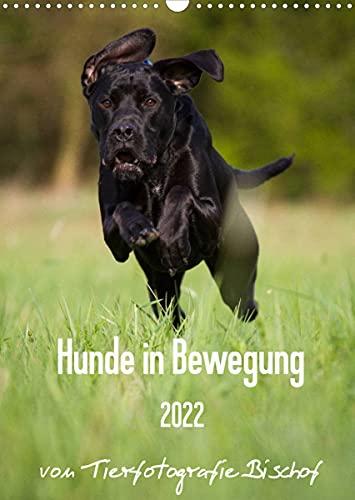 Hunde in Bewegung 2022 von Tierfotografie Bischof (Wandkalender 2022 DIN A3 hoch)