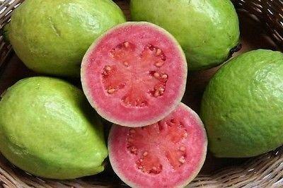 Psidium guineense - Brasilianische Guave - seltene tropische Pflanze Baum Samen (20)