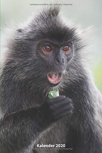 Kalender 2020 Silberner Haubenlangur: DIN A5 - 2 Seiten = eine Woche - Affe Geschenk | süße Affen | Lustige Affen