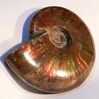 アンモナイト 化石 開運 インテリア 古生物 fossil 原石 置物 古代 化石 Ammonite アンモライト レインボー アンモン貝 パワーストーン 天然石 パワーストーン a20103