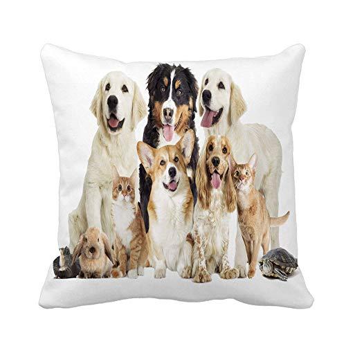 Throw Pillow Cover Group Pet on Beside Cat Cavy Close Dog Funda de Almohada Dorada Funda de Almohada Cuadrada Decorativa para el hogar Funda de cojín