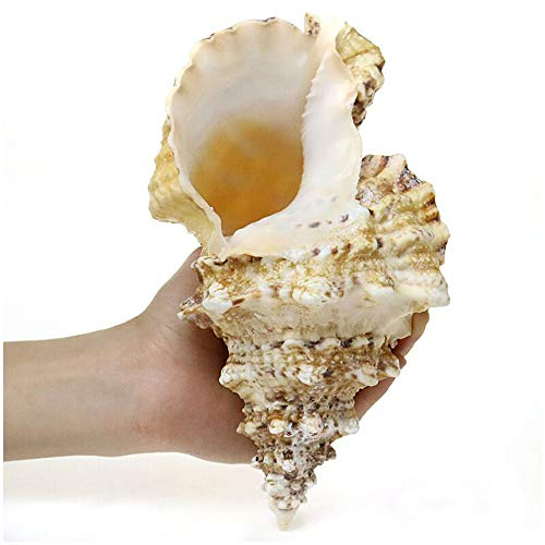 WJH Natürlich Big Sea Shells Conch Aquarium Landschaft Aquarium Ornament Home Decoration Crafts,B