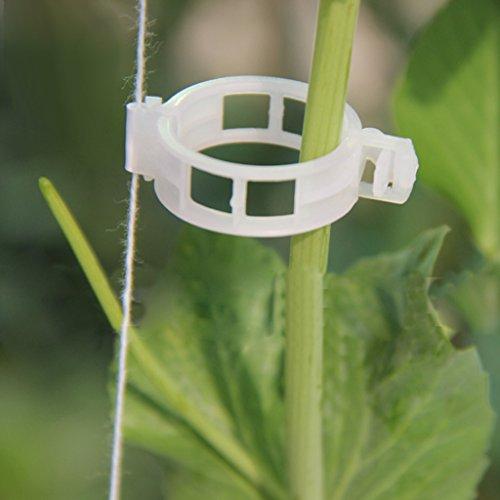 Gazechimp 100pcs Weiß Pflanzenclips pflanzenklammern Tomatenclips Verbinden Pfeffer Gurke Reben , Kunststoff