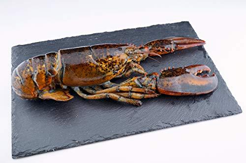 Hummer ganz tiefgefroren - Lobster / roh / MSC zertifiziert / 400g / Kanada - KOSTENLOSER VERSAND