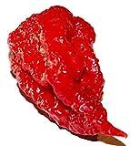 Carolina reaper - 50 Samen - eines der schärfsten Chili !!!