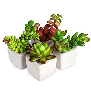Home Decor Office Decor–Artificial Shrubs Artificial Succulent Plants Mini Fake Plants for Beautifying Our Life and Home Environment (White C)