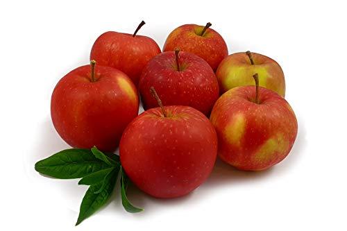 Futteräpfel   Frische Äpfel fürs Pferd - aus regionalem Anbau (19 KG)