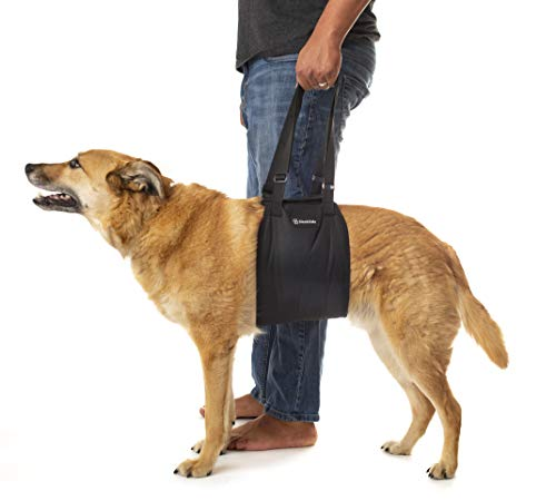 Stairlift For Dogs