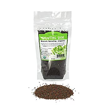 Organic Broccoli Sprouting Seeds By Handy Pantry   8 oz Resealable Bag   Non-GMO Broccoli Sprouts Seeds Contains Sulforaphane