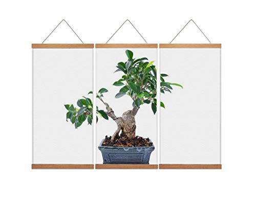 A37mieeooopa - Hanging Posters with Wood Frames Ficus microcarpa tigerbark Bonsai in Training Wall Art Canvas Artwork for Home Decoration Ready to Hang 24'x36' x 3 Panels