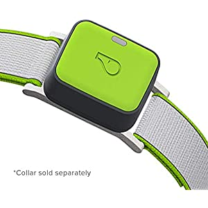Whistle Go Explore - Ultimate Health & Location Tracker for Pets - Waterproof GPS Pet Tracker, Built-in Night Light, 20 Day Battery, Pet Fitness Tracker fits on Collar or Harness - Grey