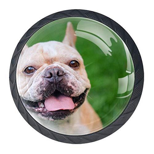 Lächelndes Gesicht Französische Bulldogge Hellbraun Schrank Knöpfe,Ziehgriffe Schubladenknöpfe Möbelknöpfe mit glas Moebelknauf Griff für Schrank Schubladen Modern Dekorativ Stil