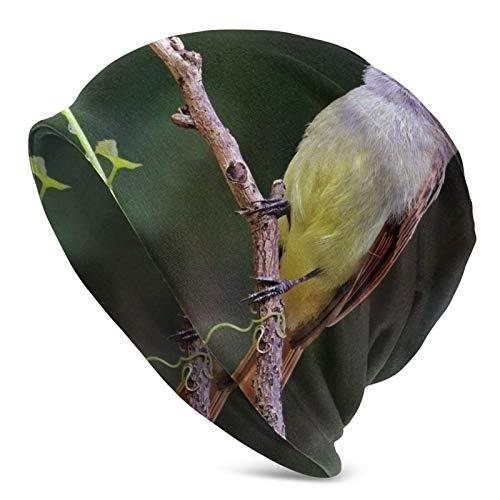 QUEMIN Baratos Flycatcher de Cola rufa Gorra de Calavera de alcaudón de Pico Amarillo Gorro elástico Gorros Holgados Sombreros de Moda de Punto de Invierno para Mujeres Hombres