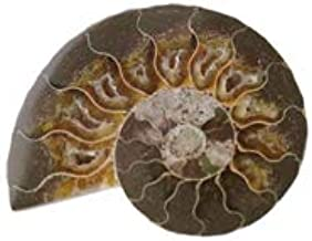Real Polished Fossil | Ammonite Fossil Half from Madagascar 1-3