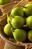 albero di Fico pianta di fico varietà Dottato Età 2 anni pianta di fichi vera in vaso venduta da eGarden.store