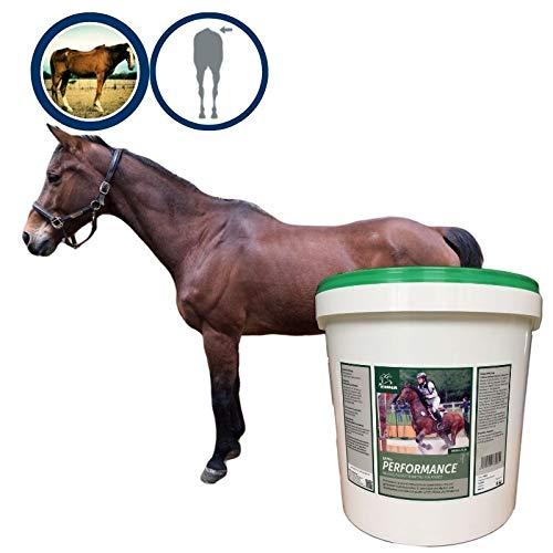 Aufbaufutter Vitamin B komplex I Soja Vitamin E Selen I Muskelaufbau Pferd I Vitamine A C K B1 B2 B6 B12 I Biotin Zink Mineralstoffe I Energy Booster I Senior alte Pferde Sportpferd 6Kg