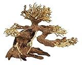 Bonsai SS - Acuario de madera natural con plantas holandesas (15 x 20 cm)