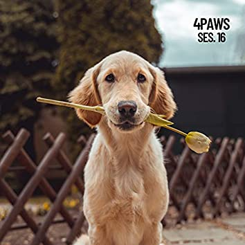 4 Paws, Sleeping Music for Dogs and Cats Session 16