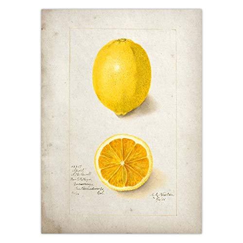 WIOIW Vintage Fruta de limón Vista seccional árbol de Hoja caduca Plantas botánica rotafolio Lienzo Pintura Pared Arte Cartel Dormitorio Sala de Estar Escuela Estudio decoración del hogar