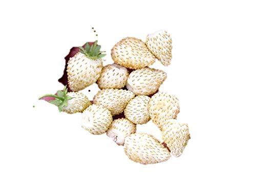 白イチゴ 種 60粒