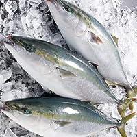 愛媛 佐田岬産 ( ブリ ) 天然一本釣り 5-6kg 浜から直送 宇和海の幸問屋