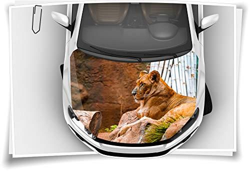 Medianlux Motorhaube Auto-Aufkleber Löwe Lion Wildnis Katze Afrika Panthera Leo Steinschlag-Schutz-Folie Airbrush Tuning Car-Wrapping Luftkanalfolie Digitaldruck Folierung
