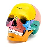 ZAMAX Modelo de Estudio 4D Puzzle Montaje de Juguete Color Humano Skull Organ Anaical Modelo Anaical Human Head Skull Modelo desmontable17 Partes, a (Color : A)