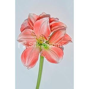 Silk Blooms Ltd Artificial Fresh Touch Peach Amaryllis Single Stem Loose Flower
