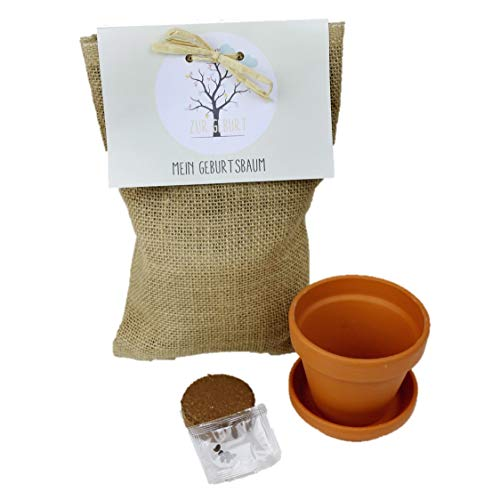 Baum Pflanzen Set Geschenkidee Zur Geburt Oder Taufe Rubinie