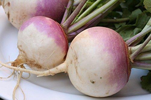 ASTONISH I semi della confezione: 3G (approx. 1000) I semi di rapa Viola Top White Globe Heritage Varietà Heirloom