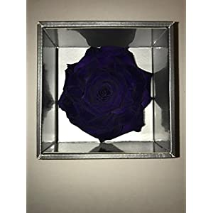 Eternal Roses – Preserved Roses with a 4 inch Bloom