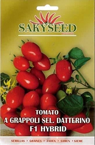 Sementi Semi Di Pomodoro Datterino Tomato Varietà Classica Giardinaggio Ortaggi Coltivazione